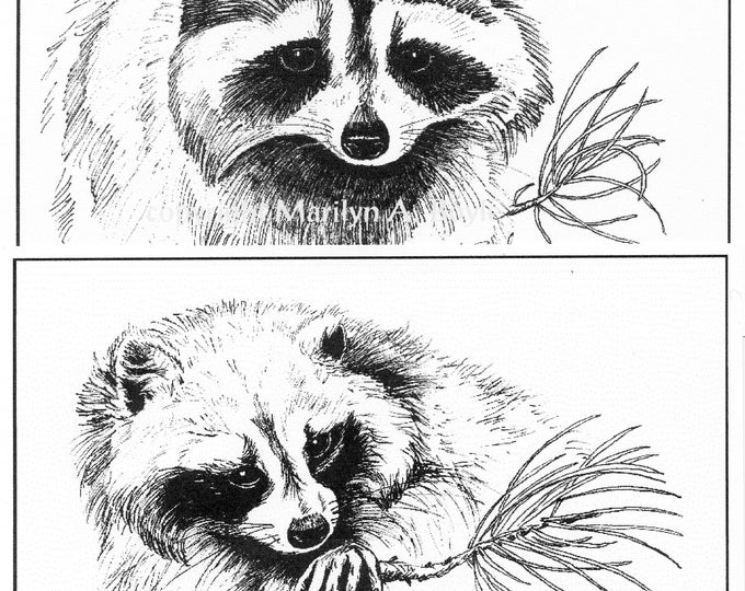 SET of RACCOON PRINTS; 5 X 7 inches, wall art, wildlife, black and white, from original drawings, pen and ink,