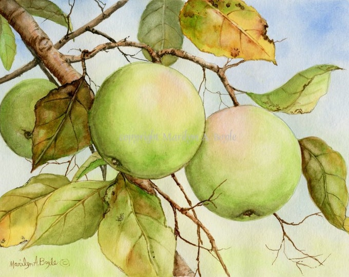 ORIGINAL WATERCOLOR PAINTING; green apples, 8 x 10 inches, on 140 lb watercolor paper, orchard, garden, fruit, dining room art, wall art