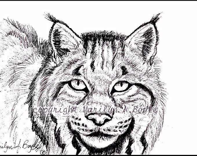 PRINT-5 x 7 inch PEN & iNK - Canada Lynx, black and white, wildlife, wilderness, Canada, option yellow eyes,
