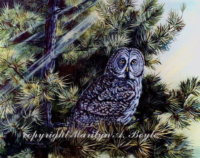 GICLEE OWL PRINT; Great Grey Owl, pine tree, sunlight, wilderness, wildlife, wings, feathers, wall art, art, nature, bird of prey, Canada