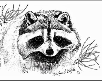 PRINT OF RACCOON - ink, wildlife, wilderness, drawing, Canada, art