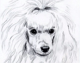 PRINT- MINIATURE POODLE, wall art, drawing, from original art,