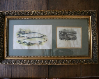 Lydon Chromolithograph Engraving Pollan Fish Coloured Natural History Freshwater Fishing Pictures British Freshwater Fishes Wall Decor Art
