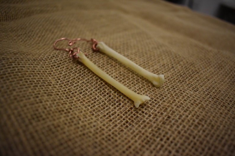 Authentic Coyote Bone Ear Weight Set