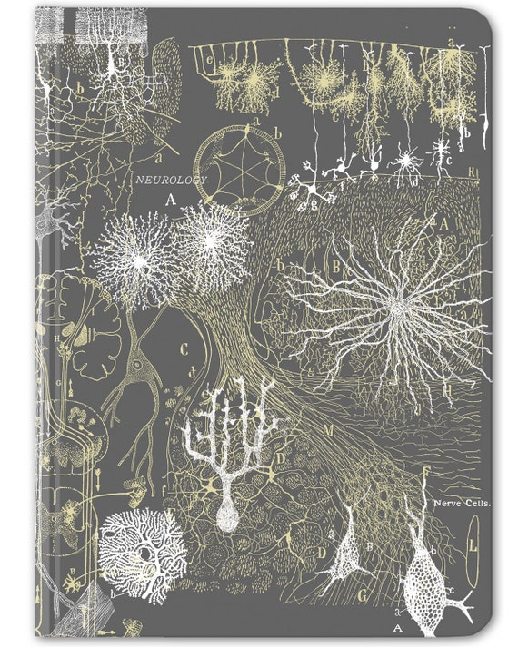 Neuroscience Bullet Journal Neurons Anatomy Hardcover Etsy