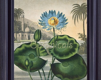 Botanical Print The Blue Egyptian Water LILY Lotus Flower Vintage 8x10 Art Print Robert THORNTON Temple of Flora Room Home Wall Decor BF0066