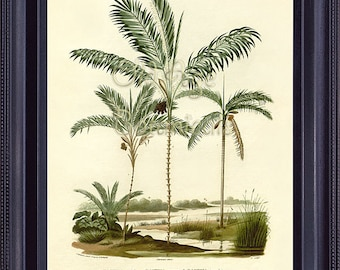 D'Orbigny Botanical Giclee Print 8x10 Palmers Plate 7 Antique Art BACTRIS Spiny Palm Trees Peach Palm Vintage Illustration to Frame MT0105