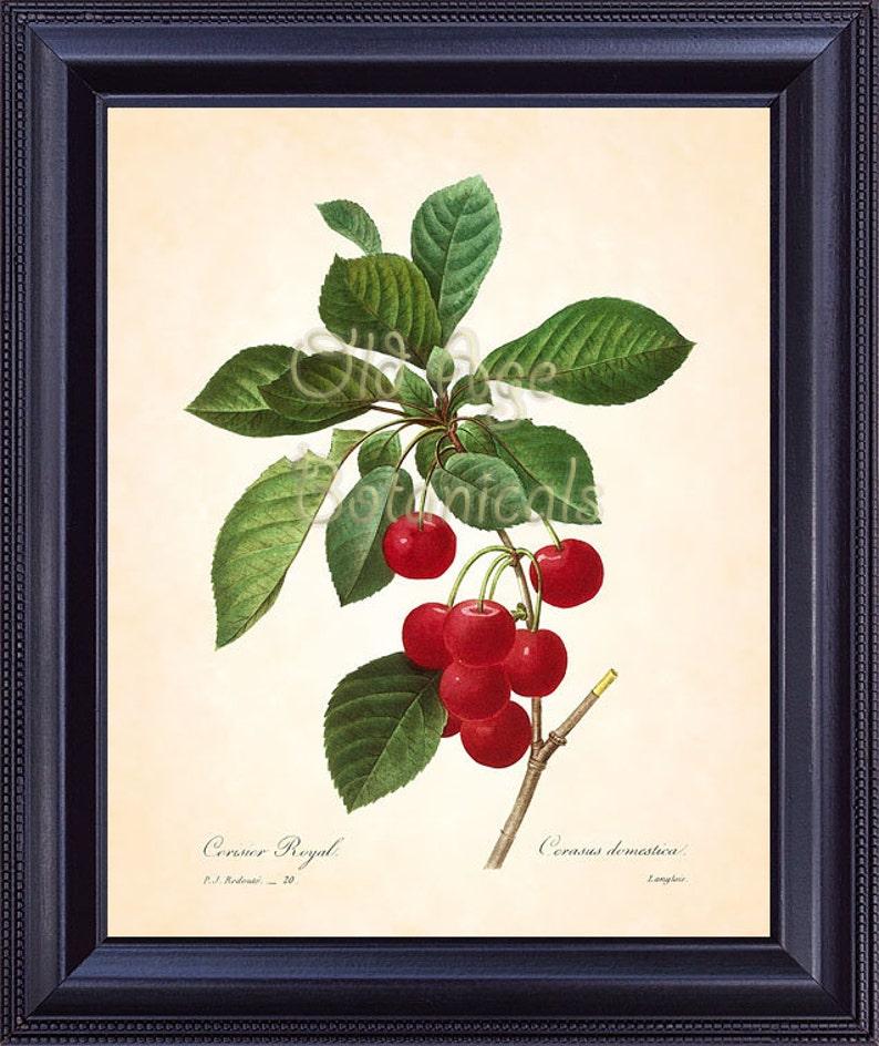 8 20 Antigua Cocina Cerezas Decoración Placa 10 X Redoute Arte Fruta Vintage Rojas Francesa Habitación Francés Botánico Impresión nNv8wm0