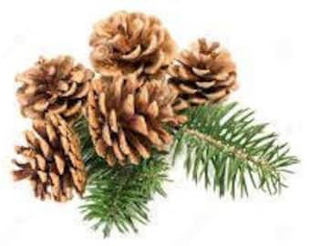 Fresh cut Evergreen Greenery & pine cones 3.00 to 13.00
