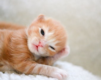 Photograph of Rescue Kitten Pondering the Ultimate Question of Life, the Universe, and Everything