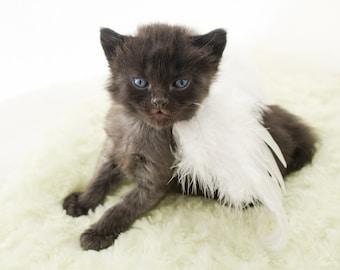 Photograph of Tiny Kitten Angel