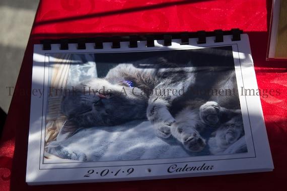 2019 Calendar - Cats
