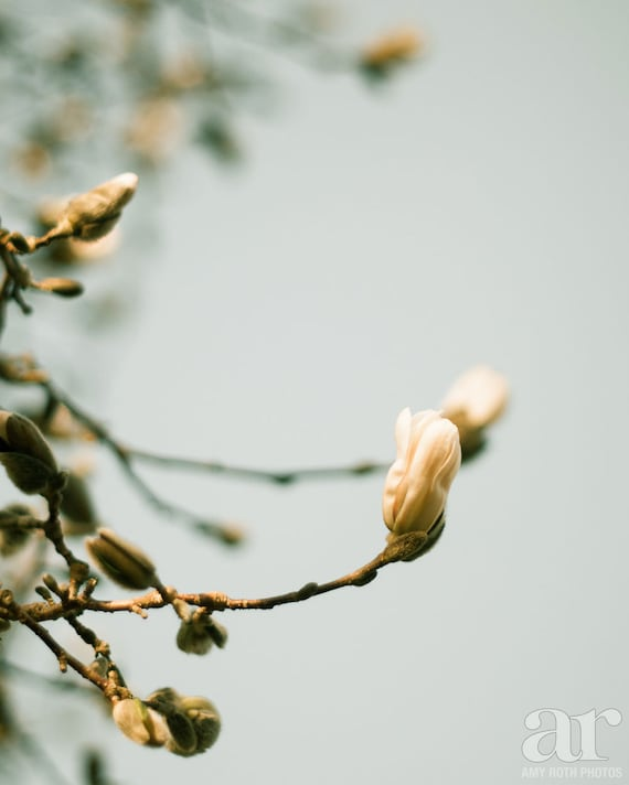 Spring Flower Buds Photo Print Wall Art Nature Photography Etsy