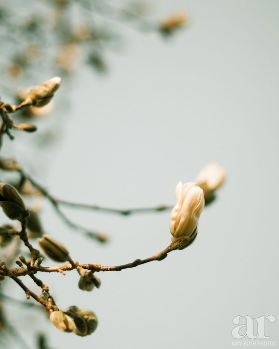 Spring flower buds photo print wall art nature photography etsy image 0 mightylinksfo