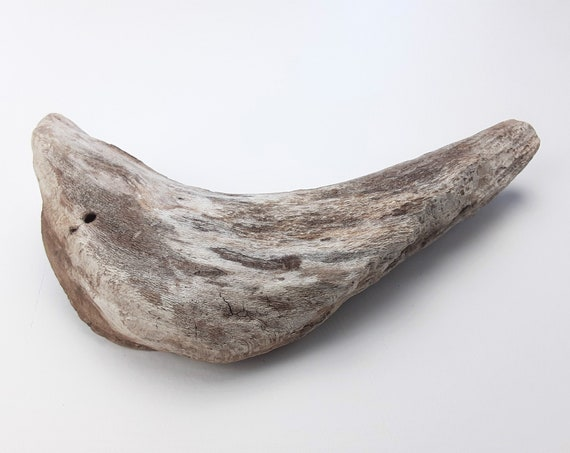"Small, Curved Driftwood Chunk, 8.25"" Long"