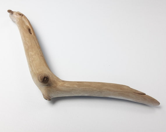 Angled, Small Driftwood Branch