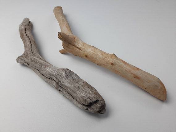 """2 Curvy, Beachy Driftwood Branches With Nubs, 12-13.5"""" Long"""