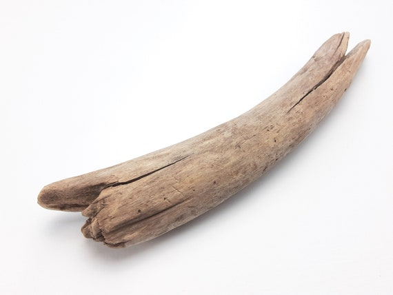 """Small, Curved Driftwood Branch, 10.5"""" Long"""