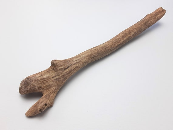 """Smooth Driftwood Branch With Unique Forks, 16.5"""" Long"""