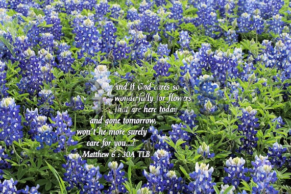 Matthew 6 30a Tlb Scripture Picture Bluebonnets Ennis Etsy