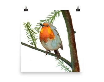 Robin in Fir Tree