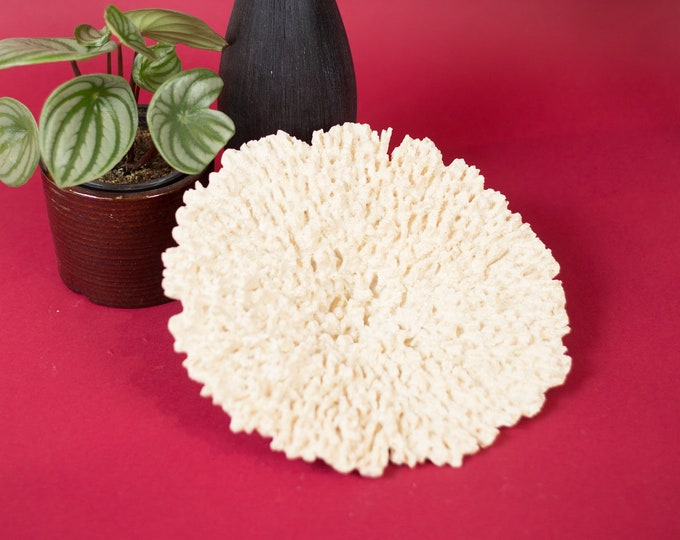 Vintage White Coral - Natural Bleached White Coral - Ocean Tropical Nautical Beach Decor