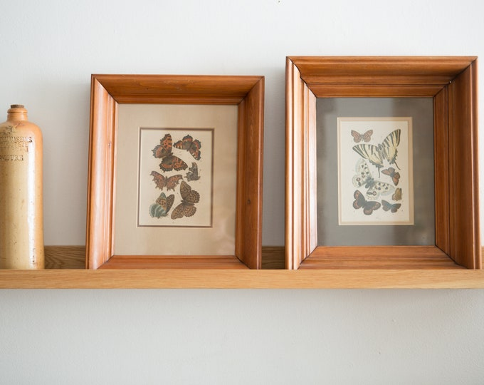 Vintage Butterfly Art - Framed Butterfly Prints - Exotic Entomology / Biology