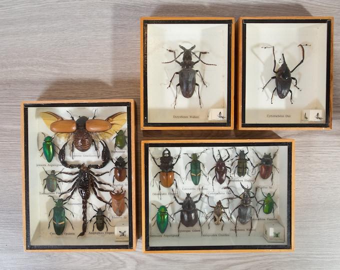 Vintage Preserved Beetle Art - Framed Scorpion and Bugs - Exotic taxidermy entomology biology bugs vintage framed under glass