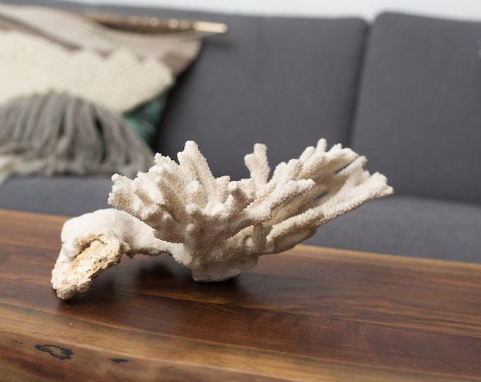 Vintage White Coral - Natural Bleached White Coral - Ocean Tropical Nautical Beach Decor