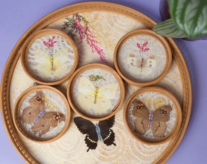 Vintage Butterfly Tray - Wood and Glass Tea Serving Tray with Coasters - Pressed Butterflies Under Glass