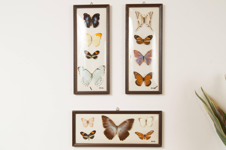 Vintage Preserved Butterfly Art - Framed Butterflies - Exotic framed ...