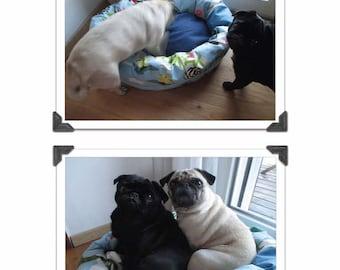 DAISY *** Hundebettchen und Katzenbettchen Pdf-Datei Nähanleitung & Schnitt DIY - Körbchen für Mops Katze Terrier, Spitz firstloungeberlin