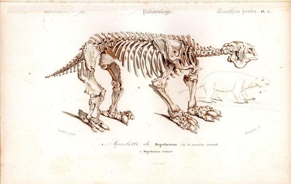 Antiguos fósiles de Megaterio 1849 imprimir esqueleto anatomía | Etsy