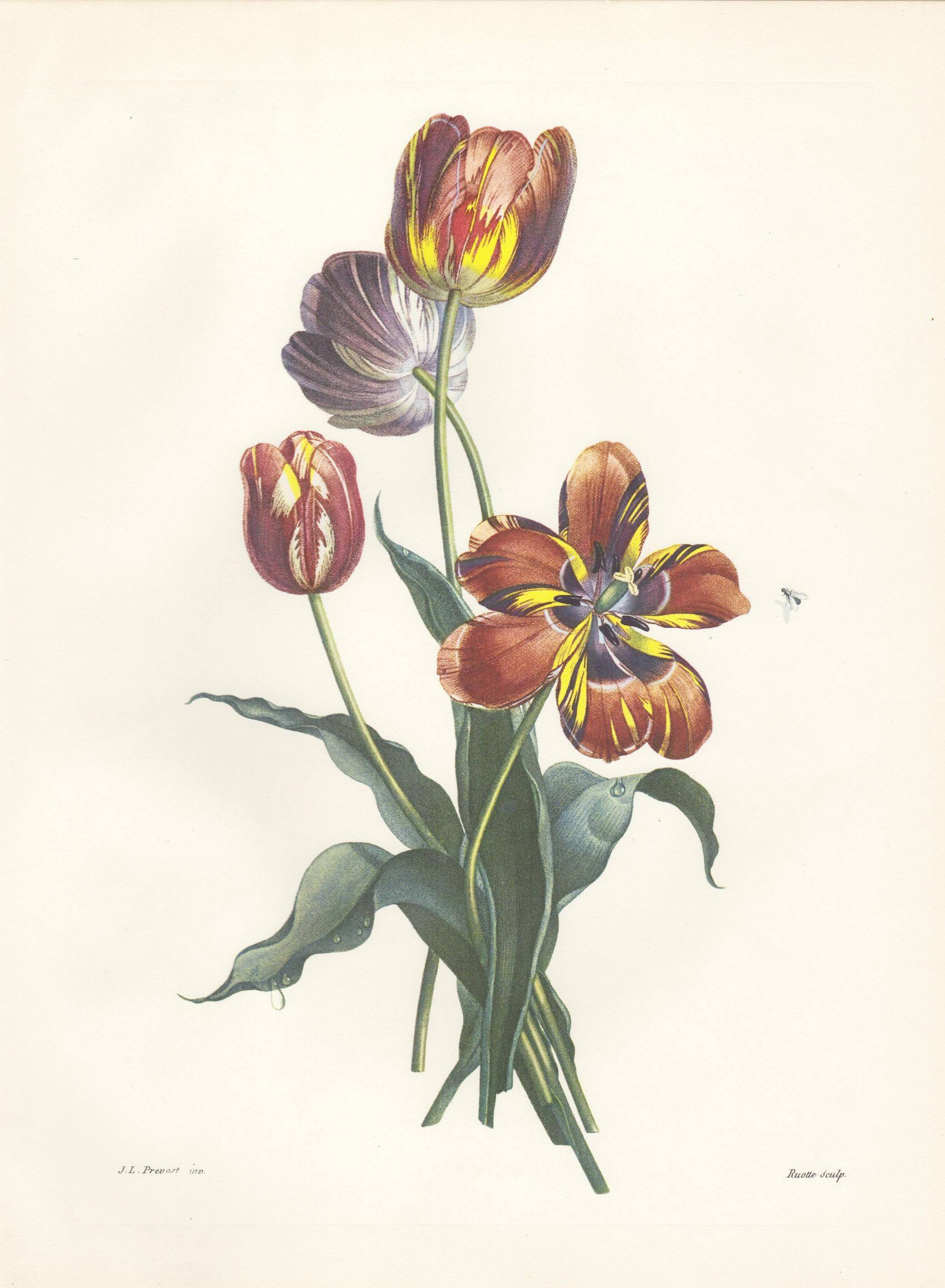 Vintage Botanical Print Tulip Print Botanical Bouquet Flower Etsy