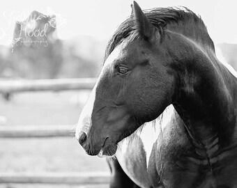 Gypsy Horse Decor- Horse Decor - Equine Art - Rustic Decor - Horse Photography Print - Fine Art Wall Hanging - Equine Photo