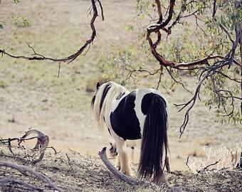 Gypsy Horse Photo - Horse Photography - Farmhouse Decor - Rustic Decor - Equine Photography - Fine Art Wall Hanging - Horse Photo