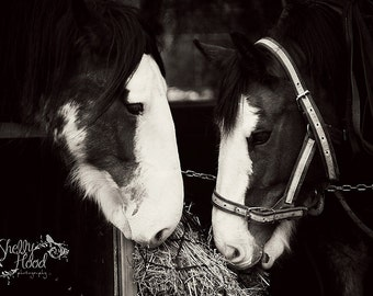 Clydesdales Eating Photo - Horse Photography Print - Fine Art Wall Hanging - Clydesdale Photo - Horse Decor - Equine Art - Rustic Decor