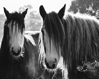 Clydesdales Art Print - Horse Photography Print - Fine Art Wall Hanging - Clydesdale Photo Print - Horse Decor - Equine Art - Rustic Decor