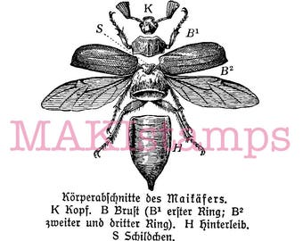 Insect rubber stamp / Maybug - unmounted rubber stamp or cling stamp (170604)