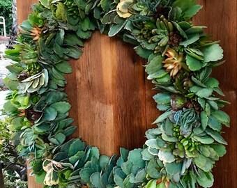 HUGE Succulent Wreath 28 inch