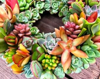 Succulent Wreath 10 inch in colors that POP