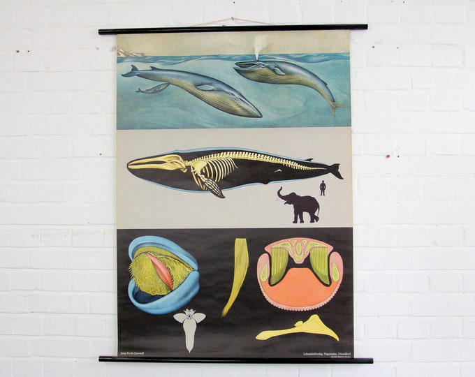 Wall Chart Of The Whale By Jung Koch Quentell Circa 1960s
