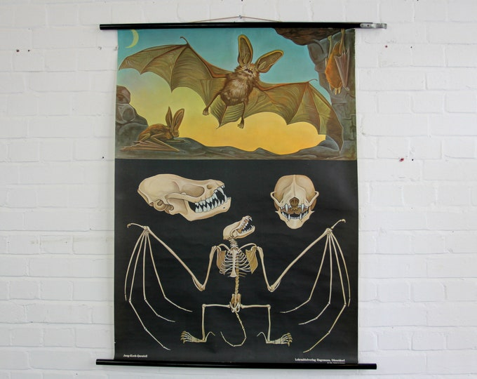 Educational Chart Of The Bat By Jung Koch Quentell Circa 1960s