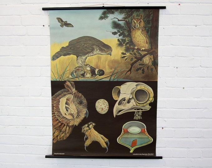 Birds Of Prey Wall Chart By Jung Koch Quentell
