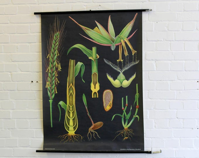 Mid Century Canvas Botanical Chart Circa 1960s