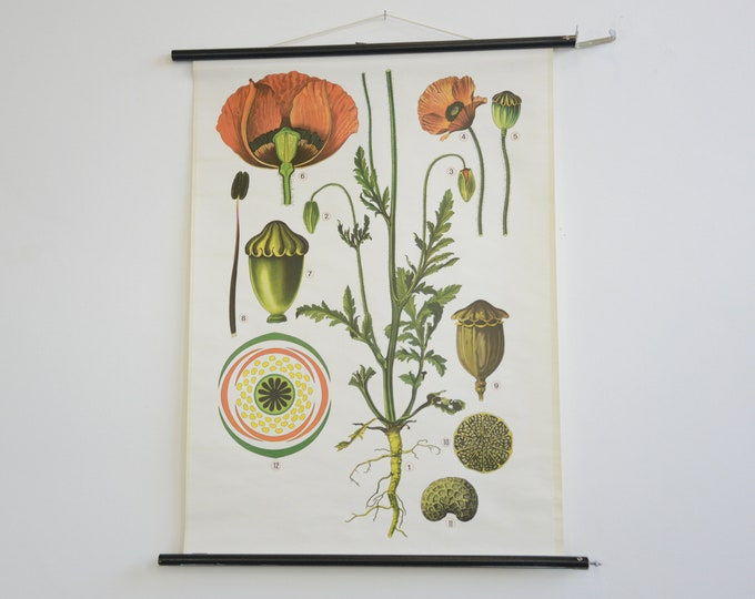 German Botanical Wall Chart Of The Poppy
