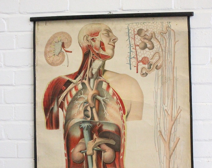 Early 20th Century Czech Anatomical Chart Circa 1908
