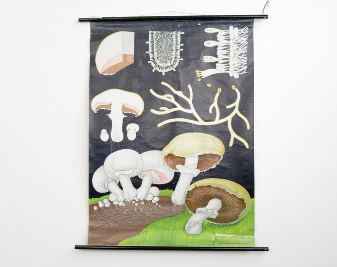 Wall Chart Of The Mushroom By Jung Koch Quentell
