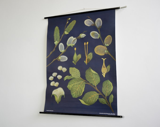 Wall Chart Of The Pussy Willow By Jung Koch Quentell