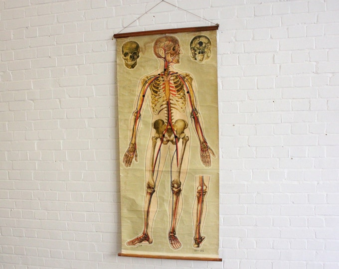 Large St Johns Ambulance Anatomical Chart Of The Skeleton